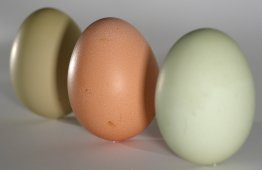 Eggs_green_brown_on_end.jpg