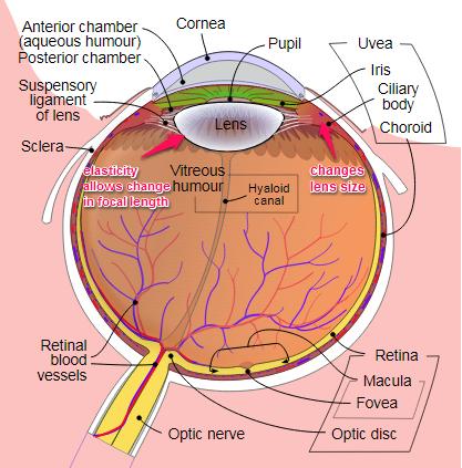 oculardiagram